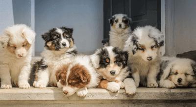 Article thumbnail - puppies