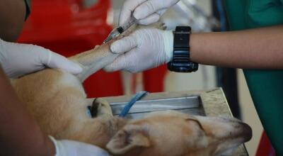 Article thumbnail - dog at the vet